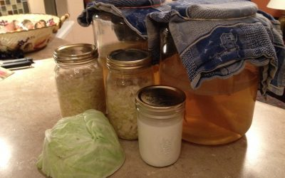 Fermented Foods Part 1